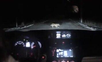 Video: Krievijas 'Subaru' reklāmā iesmej par videoreģistratoru bumu