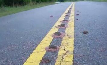 Video: Pēc intensīvām lietusgāzēm Teksasā paveras dīvains skats - ceļus noklājušas bumbās savītas sliekas