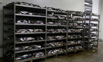 Krievija atceļ ierobežojumus 'Karavela' zivju produkcijas importam
