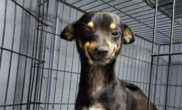 Soctīklotājus sajūsmina viltīgi smaidošs patversmes suns no ASV
