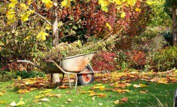 Тонкая работа секатором, или Осенняя обрезка в саду — как, что и когда?