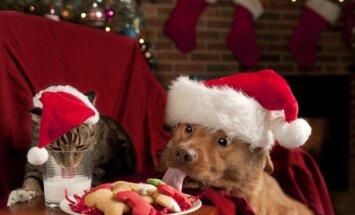 Konkurss: Kā ģimenes mīluļi gaida Ziemassvētkus?