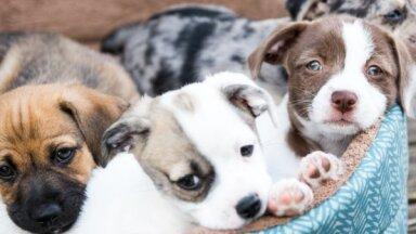 В Латвии больше нельзя продать, купить или подарить нечипированных кошек и собак