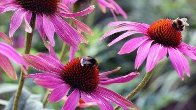 27 augi dārzā, kas piesaistīs tauriņus un bites
