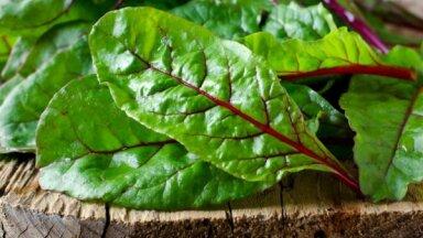 Vasaras sezonas dārgums – sarkano biešu lapas: idejas izmantošanai