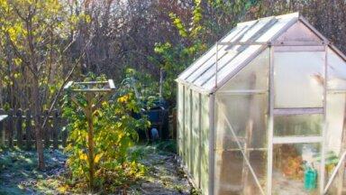 Speciālistes ieteikumi, kā pareizi rudenī dezinficēt siltumnīcu
