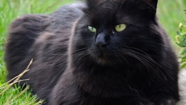 70 соток для 100 котов: в Пардаугаве появится новый приют