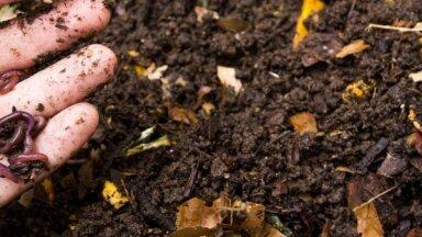 Slieku komposts dzīvoklī – tas ir iespējams