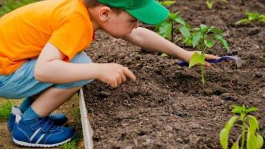 Bērns palīdz dārza darbos – vai un kā iesaistīt