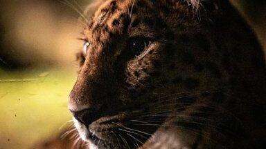 ФОТО: Чем занимаются животные в Таллиннском зоопарке с наступлением темноты, вдали от глаз посетителей?