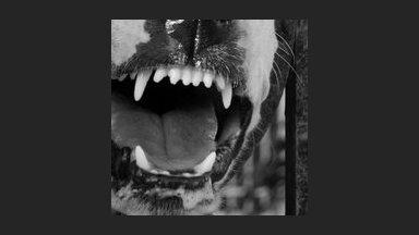 Стали известны 12 самых опасных пород собак в России
