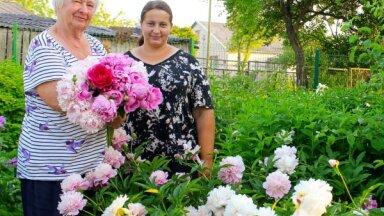Повелительницы цветов: в гостях у Иевы и Бригиты Сталидзане, в саду которых растет 250 пионов