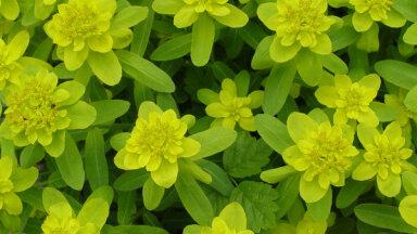 10 растений вашего сада, которые слизням