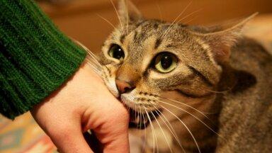 Почему коты кусаются, когда их гладят?
