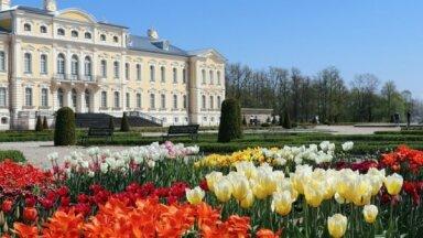 ФОТО. Сад Рундальского замка заполнили прекрасные тюльпаны и нарциссы