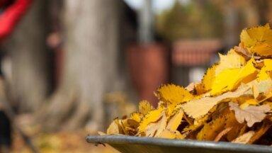 Rīgā oktobra izskaņā un novembrī varēs bez maksas nodot koku un krūmu lapas
