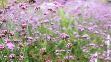 Monostādījumi dārzos: kas tie ir un kādus augus izvēlēties