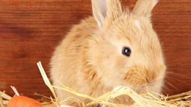 Декоративные кролики: что нужно знать о пушистых любимцах семьи