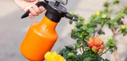Нужно ли обрабатывать сад осенью медным купоросом?