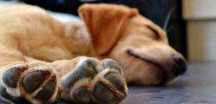Хозяева смертельно больных собак объединились — идет сбор денег на поиск виновных