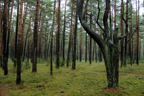 Trešdien dzēsti meža ugunsgrēki divu hektāru platībā