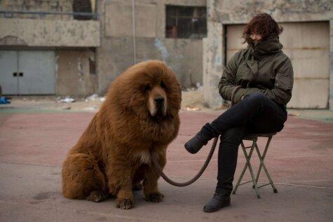 Dārgi suņi, kalni, pašaizdegšanās - fakti, ko ir vērts zināt par Tibetu