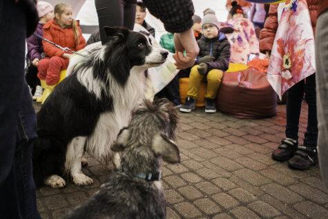 Помоги детям из SOS-поселков встретить собак-докторов!
