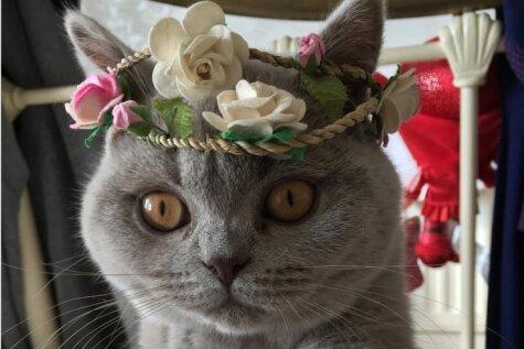 17 милых котяток, которые скрасят тебе эту сложную предзарплатную неделю