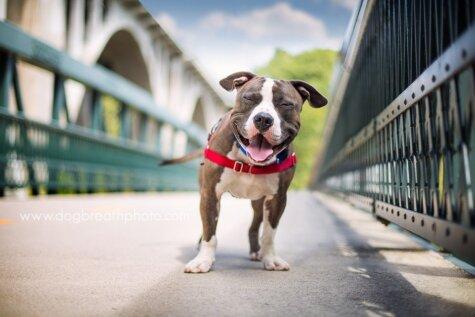 Четыре лапы, хвост и душа в фотографиях собак Кайли Грир