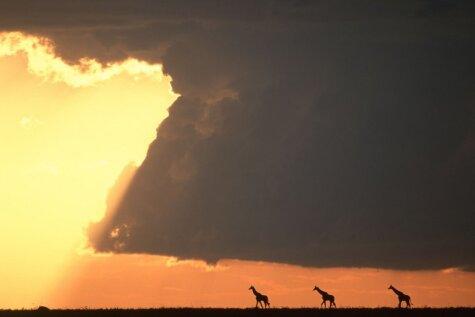 Neticami skaisti saullēkti un saulrieti, kas vērojami tikai Āfrikā