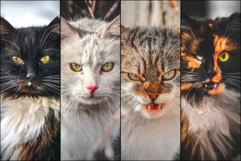 Смотри под ноги! 11 портретов бродячих котов авторства 19-летнего литовского фотографа