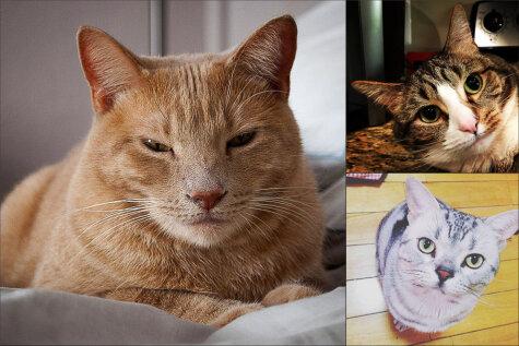 Невозмутимость в кото-квадрате: коты, которые переиграют тебя в гляделки
