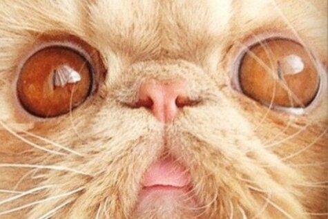 Jauns interneta varonis – kaķis Vinstons ar īpaši trulu ģīmīti