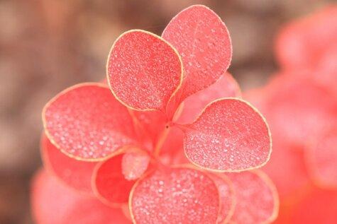 Piešķir spilgtumu un dzīvesprieku savam dārzam