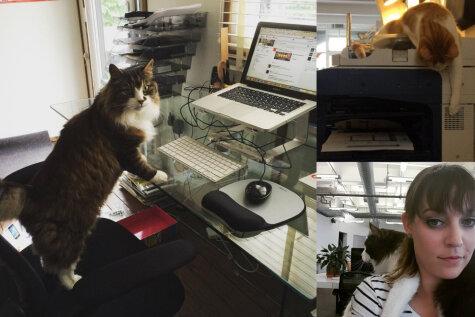10 доказательств того, что в каждом офисе должен быть кот