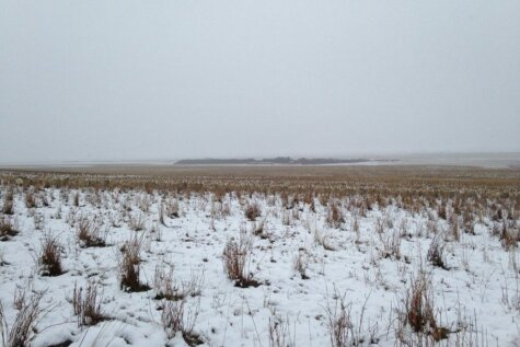 Šajās bildēs ir 500 aitas. Bet vai varat ieraudzīt kaut vienu?