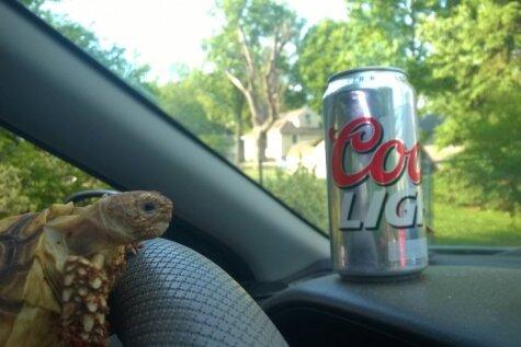 Kokaīns, alus pie stūres un zvēru porno – kā izklaidējas bruņurupucis