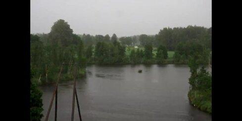Peldošās salas Ungurpils dzirnavu ezerā