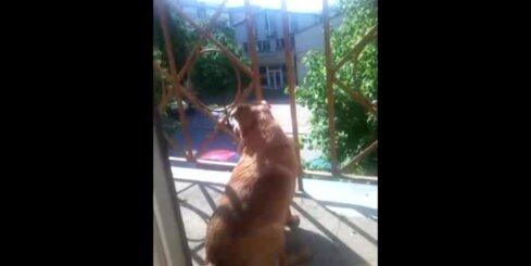 Suns, kas dzied