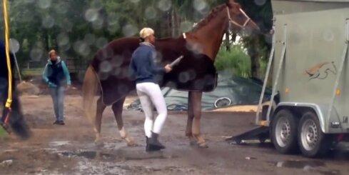 Ar kādiem paņēmieniem zirgs tiek iedzīts piekabē