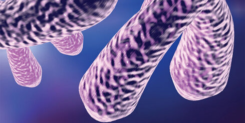 Noslēpumainie telomēri: kāpēc un kā palielināt to garumu?
