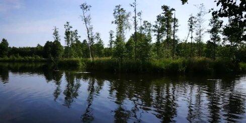 Lasītājs iemūžina peldošās salas Ungurpils dzirnavezerā