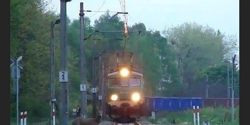 Stirna pēdējā brīdī izvairās no vilciena