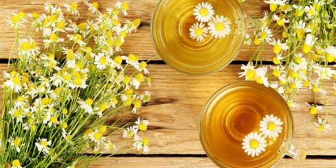 Augu vākšanas ABC: 16 baušļi, kas jāievēro, ievācot dabas veltes zāļu tējām