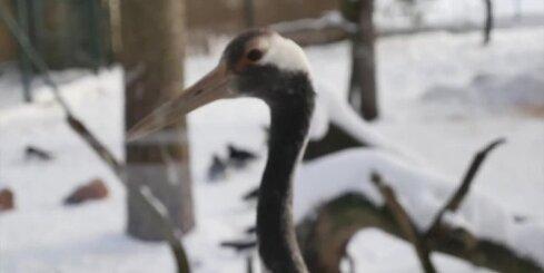 Фенолог: январь выдастся теплее обычного, снег будет чередоваться с оттепелью