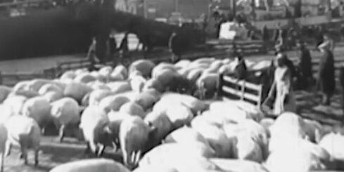 Arhīva video: Latvijas bekons ceļo uz svešām zemēm, 1938. gads