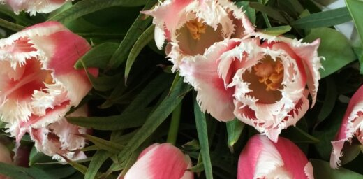 Прекрасный вариант для фирм и тех, кто торопится: заказ доставки цветов через интернет