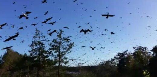 Video: Atpūtnieki Ķemeros iemūžina apokaliptisku ainu