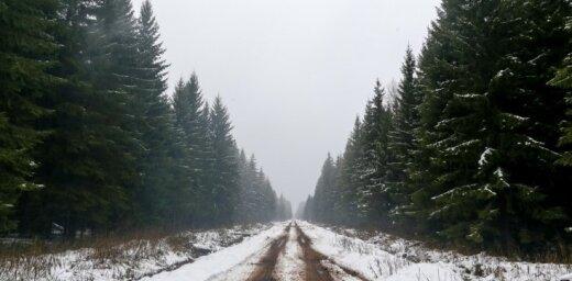 Valsts atbalsts projektiem meža nozarē būs 237 927 eiro