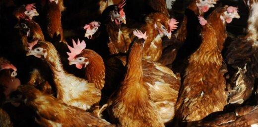 Защитники животных готовят пикеты у супермаркетов Rimi